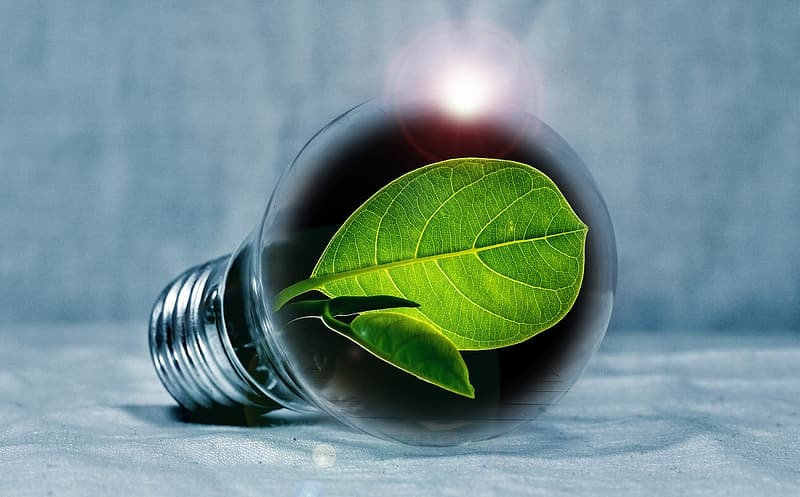 illustration of light bulb with green leaf