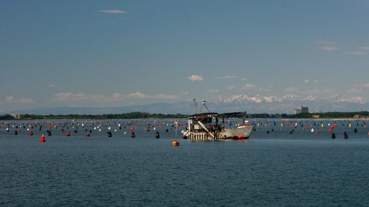 Veneto: al via bandi per le imprese ittiche che hanno subito danni a causa del Covid